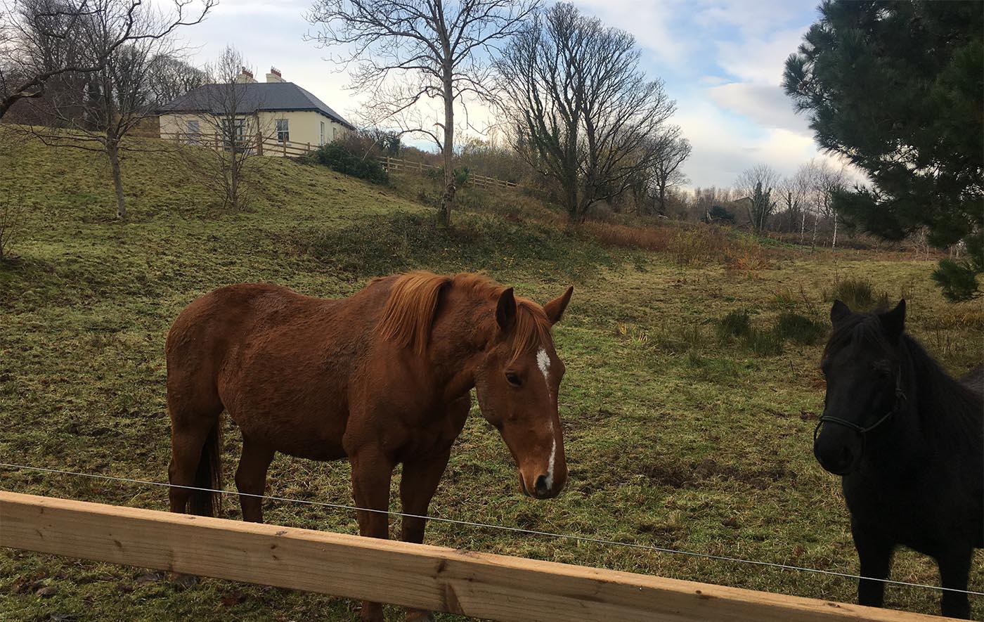 Killadanganhouse_horses